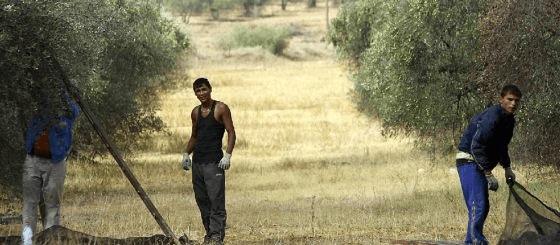 Reducción del número mínimo de jornadas realizadas para acceder al subsidio agrario en Andalucía y Extremadura
